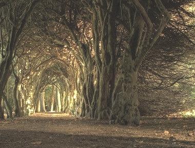Tree Tunnel, Meath, Ireland