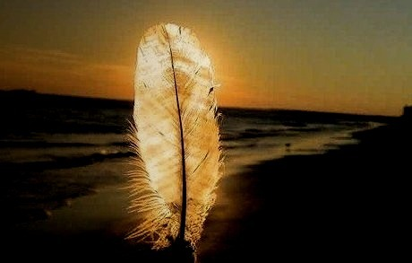 Feather Sunset, Normandy, France