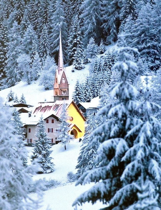 Snow Forest, The Dolomites, Italy