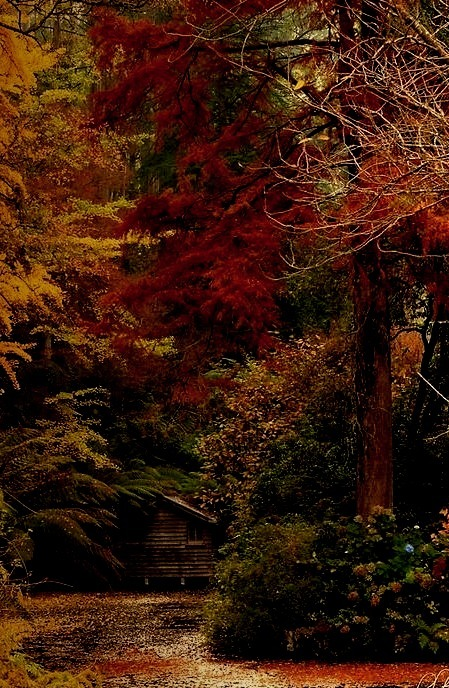 Forest House, Dandenong Mountains, Australia
