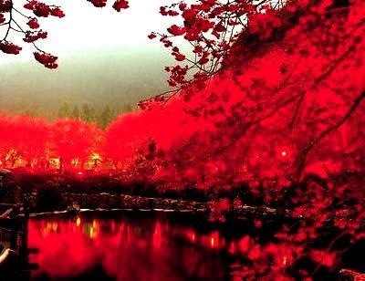Cherry Blossom Lake, Sakura, Japan