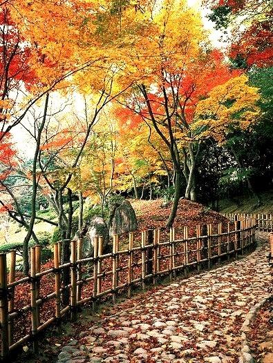 Autumn colors in Ritsurin Park, Takamatsu, Japan