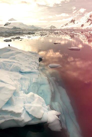 Icebergs on Paradise Bay, Antarctic Peninsula
