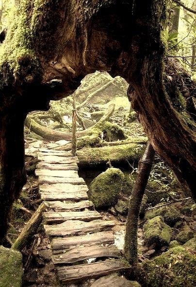 Primeval Forest, Yakushima, Japan